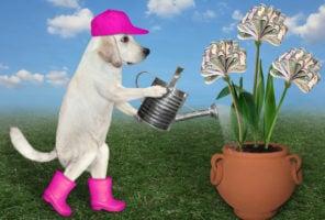 Dog, money, nurture