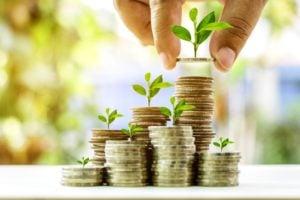 money plant grow