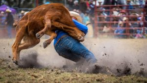 cattle, wrangle, cowboy